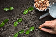 Farmer`s hand planting a seed. In soil Royalty Free Stock Photo