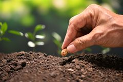 Farmer`s hand planting a seed. In soil royalty free stock image
