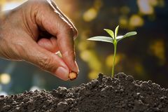 Farmer`s hand planting a seed. In soil Royalty Free Stock Images