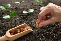 Farmer`s hand planting a seed stock photo