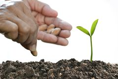 Farmer`s hand planting a seed in soil. Isolated on white background Stock Photos