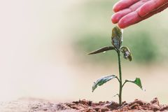 Farmer`s hand watering a young plant on green bokeh nature. stock photos