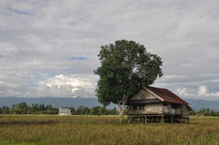 Farmer's House. A farmer's house in the middle of paddy field stock photography
