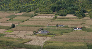 Farmer's houses in the middle of corn field Royalty Free Stock Photos