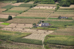 Farmer's houses in the middle of corn field Stock Photo