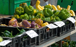 Farmer's market peppers. Colorful peppers for sale at a farmer's market.  Varieties include purple tequila, bell, giant marconi Stock Photography