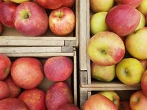 Crates of apples directly above stock photo
