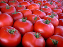 Farmer's Market Tomatoes Royalty Free Stock Images