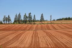 Farmer's Treeline Stock Photo