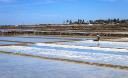 Farmer in Salt field Royalty Free Stock Photo
