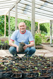Farmer with seedlings. Farmer is sitting with a pot of seedlings in the greenhouse Royalty Free Stock Image