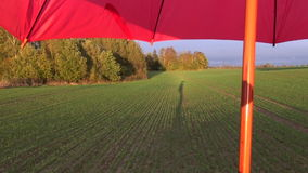 Farmer shadow on autumn evening crop field and red umbrella stock footage