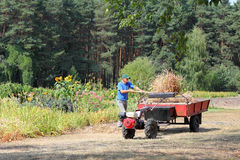 Farmer shipping hay. In walk-behind tractor stock photography