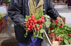 Farmer show ripe fresh  radishes in  a market. Picture of a farmer show ripe fresh  radishes in  a market Royalty Free Stock Photos