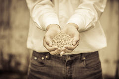 Farmer Showing Animal Dry Food Royalty Free Stock Photography