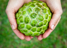 Hands holding Sugar-apple Royalty Free Stock Photos