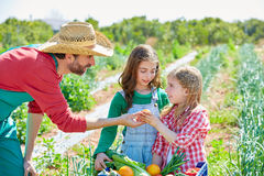 Farmer showing vegetables harvest to kid girls Stock Images