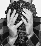 Farmer shows his harvest. Winegrower holds cluster of ripe grapes. Farmer shows his harvest. Winegrower holds cluster of dark ripe grapes. Man holds bunch of Royalty Free Stock Photo