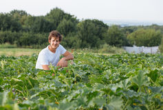 Farmer sitting on the zucchini field at organic farm. Portrait of gardener inspecting young squash Royalty Free Stock Photos