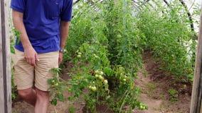 Farmer in small greenhouse stock video