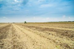 Farmer sowing crops at field Royalty Free Stock Images