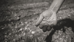 Farmer sowing seeds in the fields Royalty Free Stock Photos