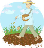 The farmer sows grain. In the field Stock Image