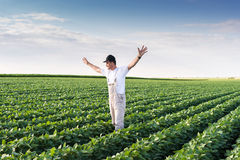 Farmer in soybean fields. Young farmer in soybean fields Stock Image