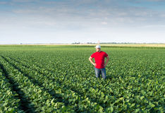 Farmer in soybean fields. Young farmer in soybean fields Stock Photography