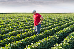 Farmer in soybean fields. Young farmer in soybean fields Royalty Free Stock Images