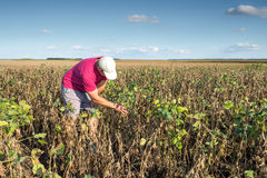 Farmer in soybean fields Royalty Free Stock Images