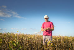 Farmer in soybean fields Royalty Free Stock Photography