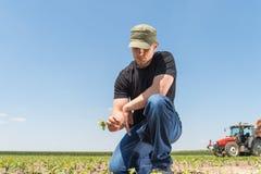 Farmer in soybean fields Stock Photography