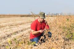 Farmer in soybean fields Stock Photo