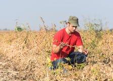 Farmer in soybean fields Royalty Free Stock Photos