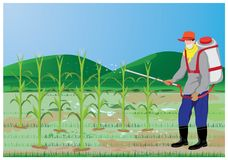 Farmer spray corn plant. Design Royalty Free Stock Photos