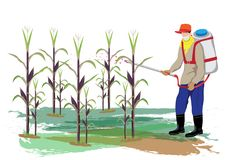 Farmer spray corn plant. Vector design Stock Photo