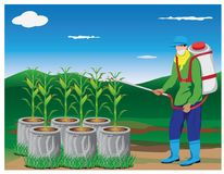 Farmer spray corn plant. Vector design Royalty Free Stock Images