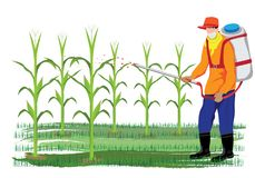 Farmer spray corn plant. Vector design Royalty Free Stock Photo