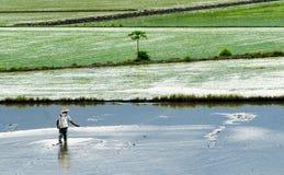 Farmer spray insecticide Royalty Free Stock Photos