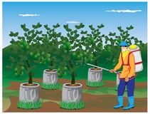 Farmer spray lime plant. Vector design Stock Photos