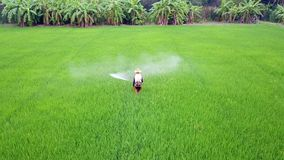 Farmer spray on rice farm stock video footage