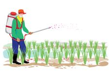 Farmer spray rice plant. Design Royalty Free Stock Image