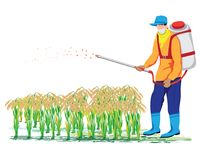 Farmer spray rice plant. Vector design Stock Photography