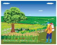Farmer spray rice plant. Vector design Royalty Free Stock Photography