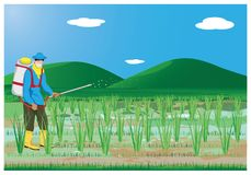 Farmer spray rice plant. Vector design Royalty Free Stock Photo