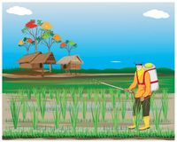 Farmer spray rice plant. Vector design Stock Photo
