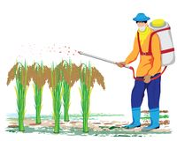 Farmer spray rice plant. Vector design Royalty Free Stock Image