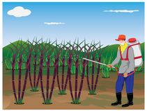 Farmer spray sugar cane plant. Vector design Stock Images