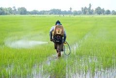 Farmer with sprayer. Farmer working with sprayer in rice filed Stock Photos